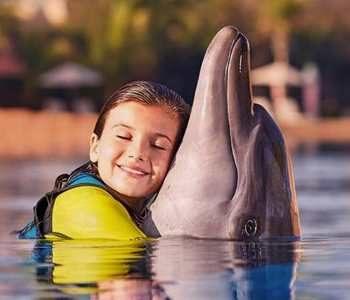 Парк морских животных Dolphin Bay Дубай